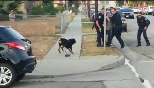hawthorne police kill dog Hawthorne police are striking back against the man whose dog they killed on video in june, which led to an international outcry against the southern california police department, resulting in more than 10,000 emails to the department, including a few threats on tuesday, he was charged with six felony counts for allegedly confronting a [.