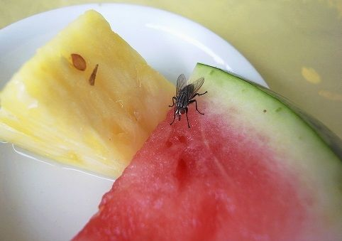 how to get rid of fruit flies quick and easy