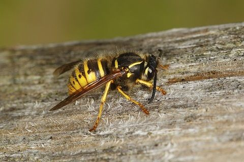 see wasps invade family home the photo will give you nightmares