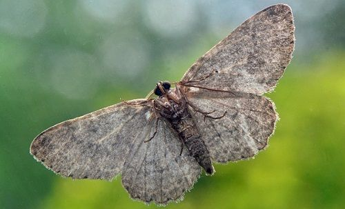 9 Natural Ways To Get Rid Of Moths Before They Destroy